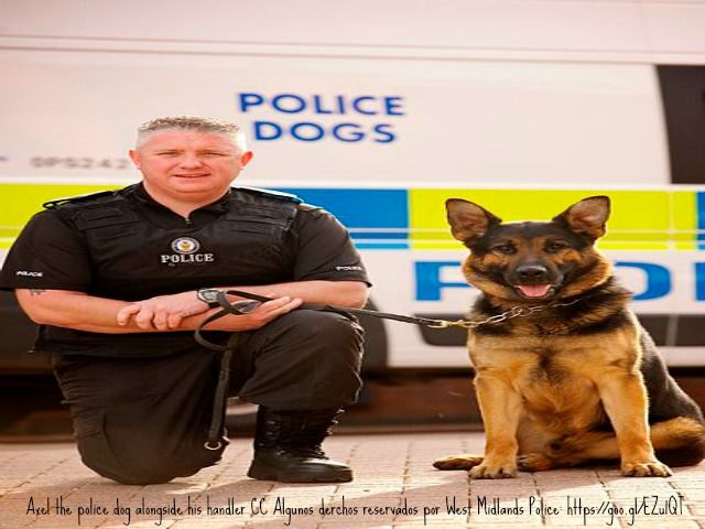 Pin By Patricia Hundley On Animal Love Police Dogs K9 Dogs Police