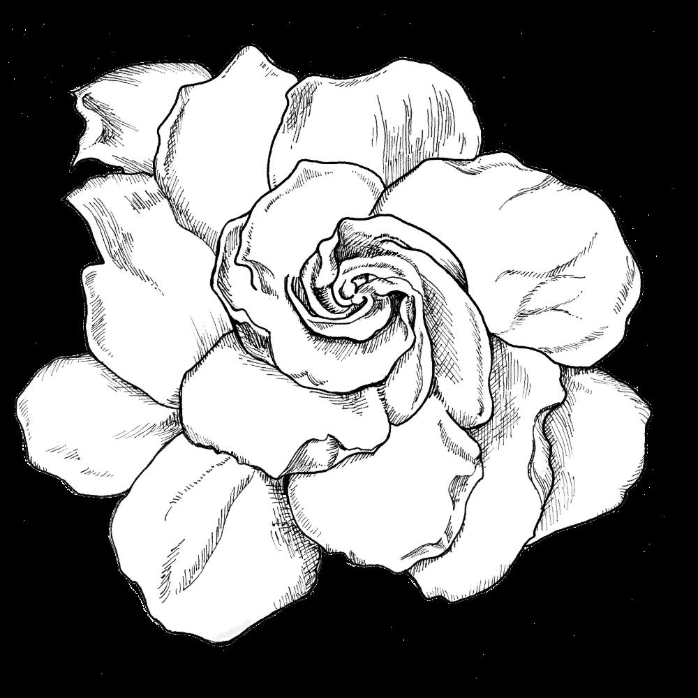 Gardenia1 In 2020 Gardenia Tattoo Body Art Tattoos Gardenia