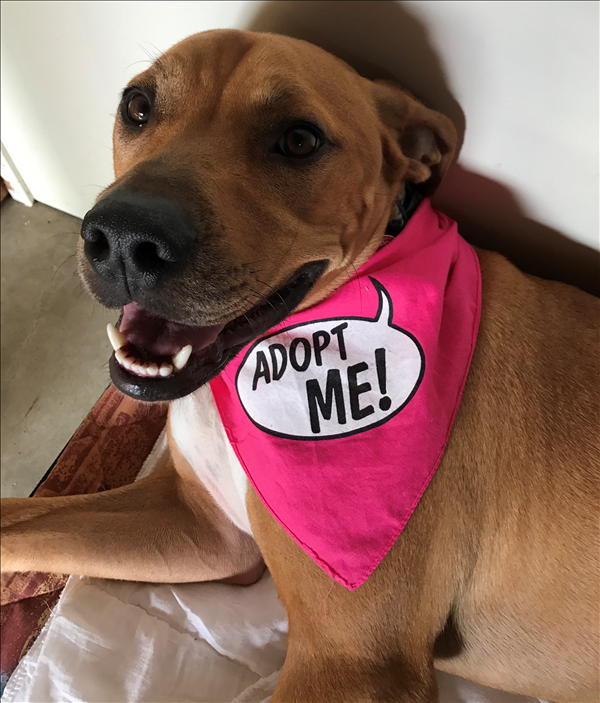 Hi There I M Ridge I M A Sweetheart That Loves To Play And Cuddle I Ve Got A Massive Heart And A Lot Of Love To Give Come Cuddling Adoption Animal Welfare