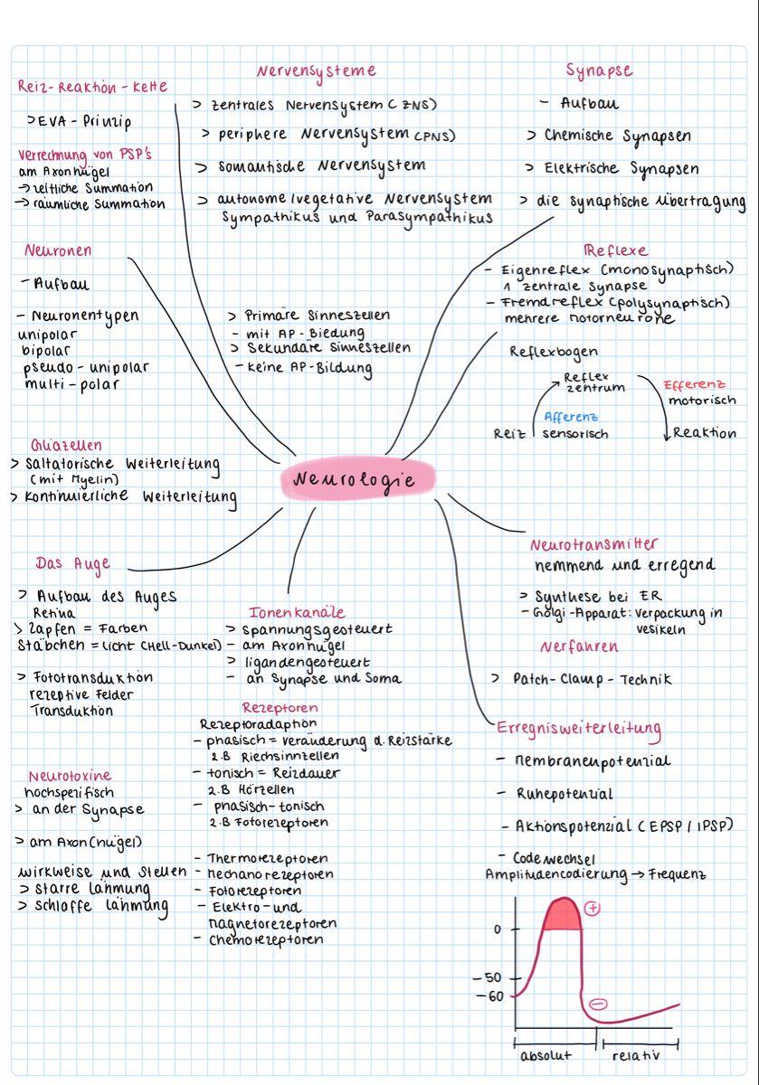 20 Lernzettel Ideen in 20   biologie, biologie abitur, tipps zum ...