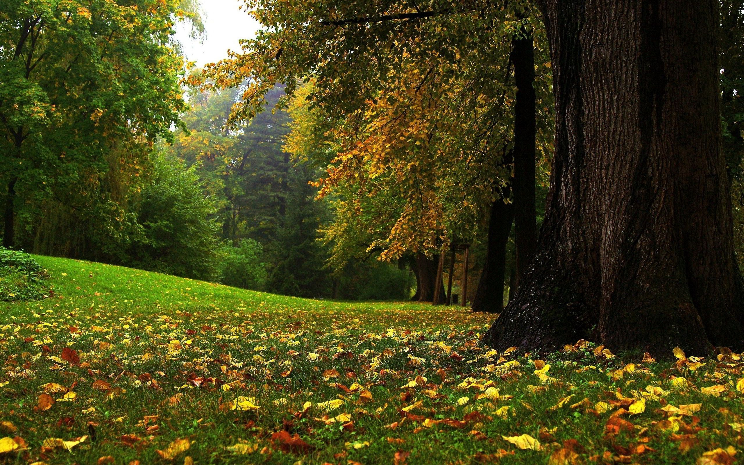 Fall Wooded Wallpaper Forest Glade Autumn Forest Glade Wallpapers Pictures