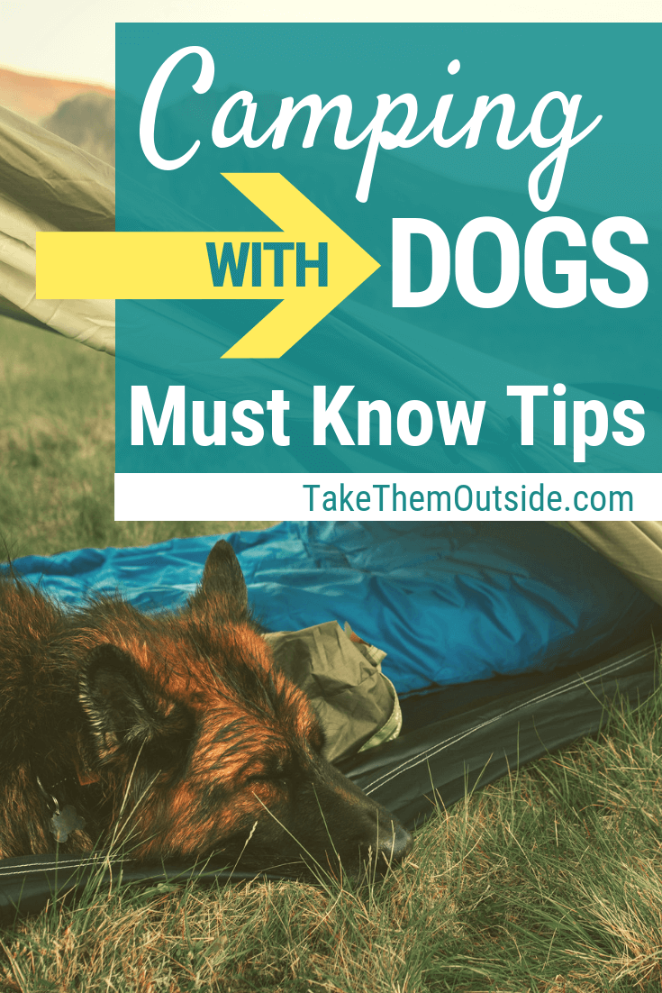 Photo of 6 quick tips for camping with your dog