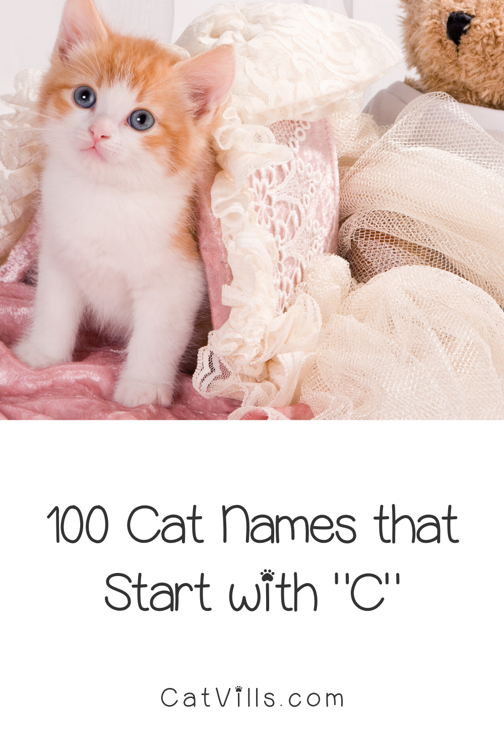 100 Cat Names That Start With C Catvills In 2020 Cat Names Cute Cat Names Cats