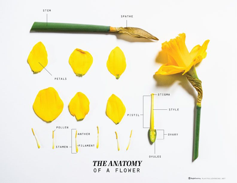 Parts Of A Flower Video And Lab Homeschool Science Botany