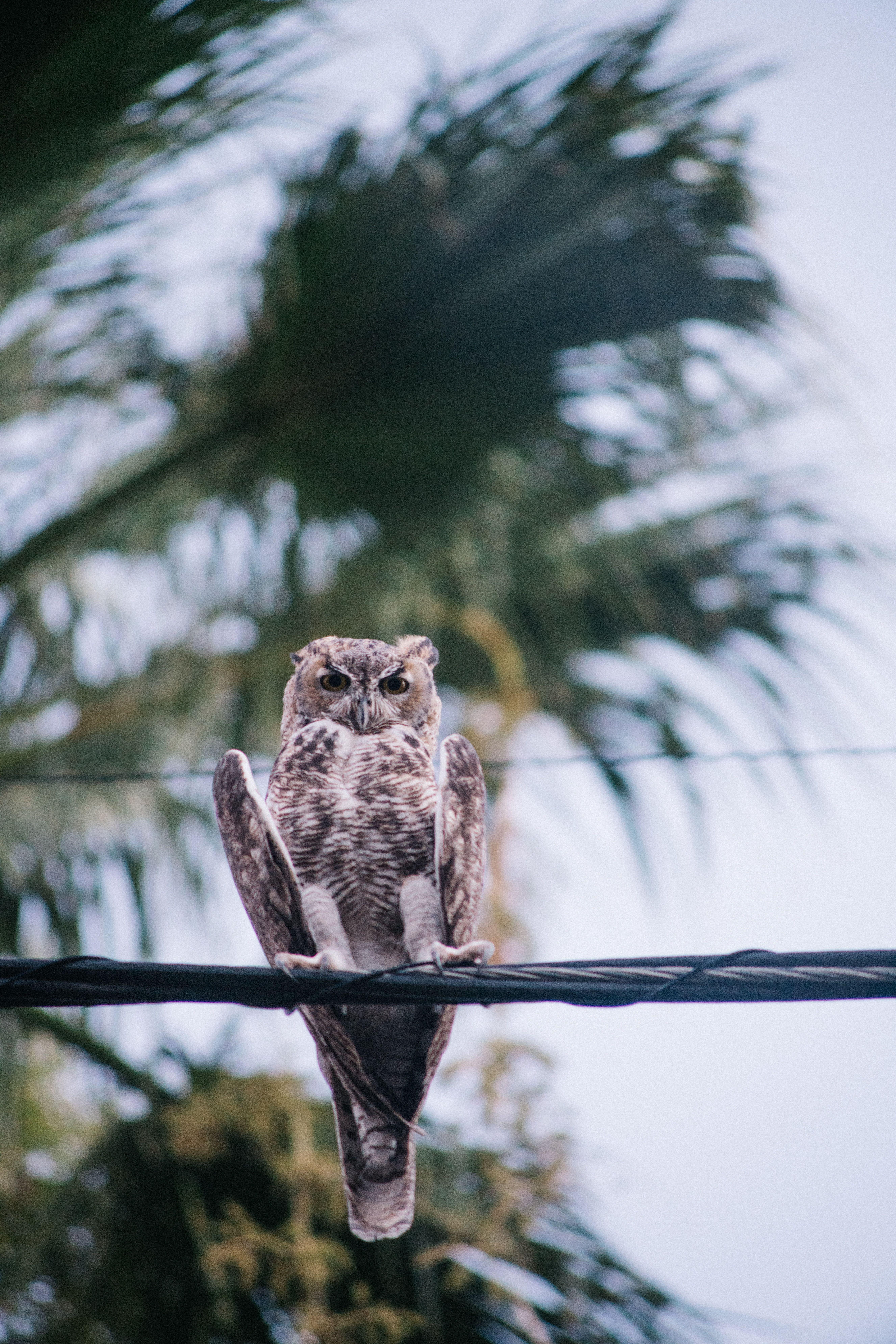Wallpapers eye, pierrot, eastern screech owl, beak, music