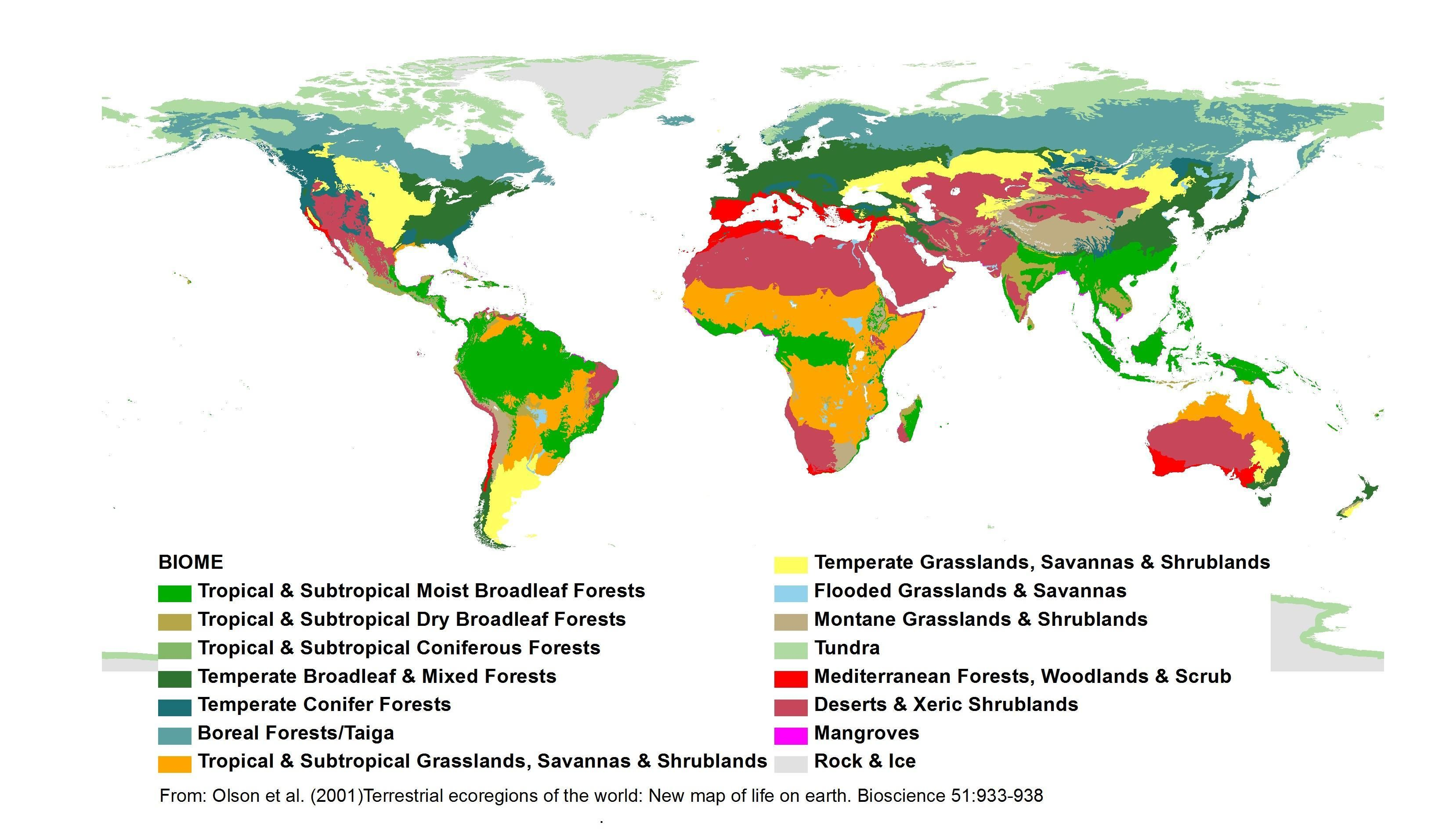 Terrestrial Ecoregions Of The World New Map Of Life On Earth Published By The American Institute Of Biological Science Olson Et Al 2 Biomes Earth Map Map [ 1914 x 3267 Pixel ]