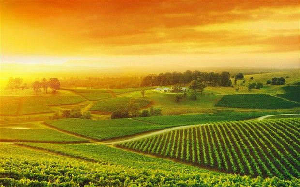 Hunter Valley, New South Wales. (we stayed there when we took Landon back to visit his mission-GORGEOUS!)