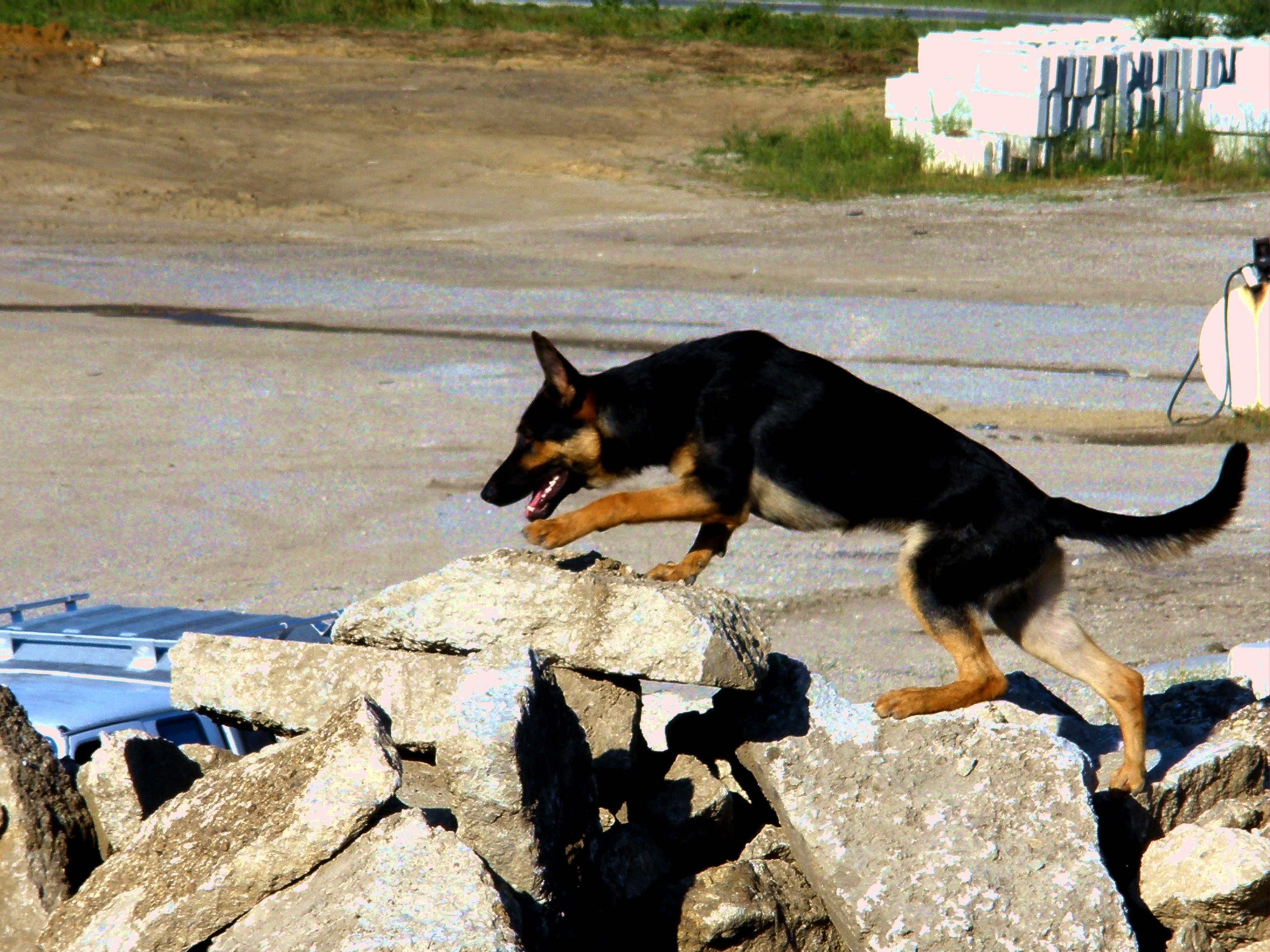 In September, dog and handler traveled to Iowa and