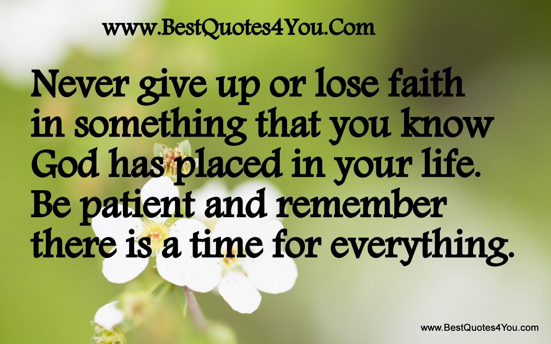 Do Not Give Up Hope Quotes