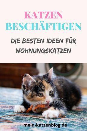 Photo of ▷ Katze beschäftigen: TOP Ideen & Spielzeug für Wohnungskatzen 2020