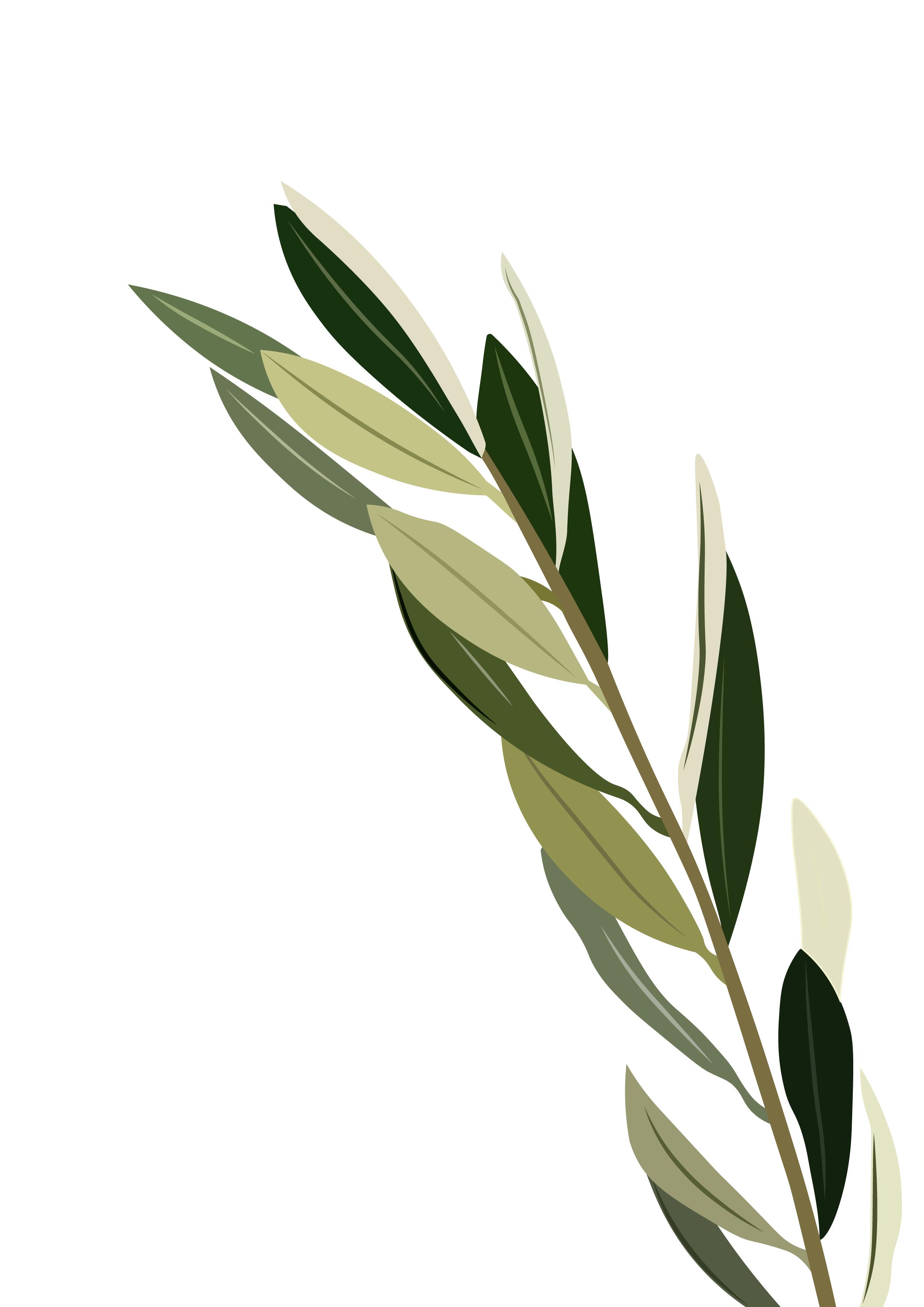 Olive Branch Olive Foliage Olive Tree Tattoos Plants