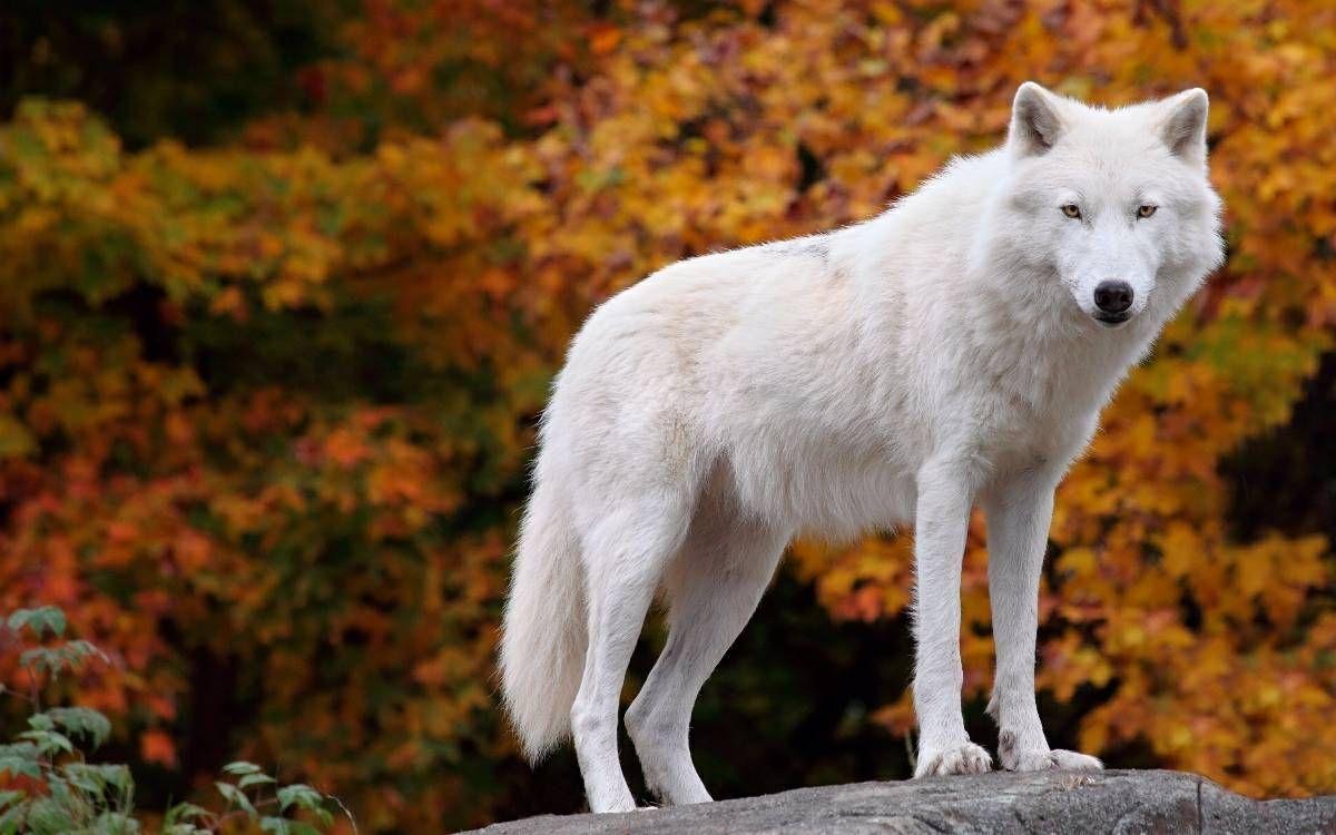 Favoritos Fotografia Essencial: Animais selvagens no outono | animais  TB75