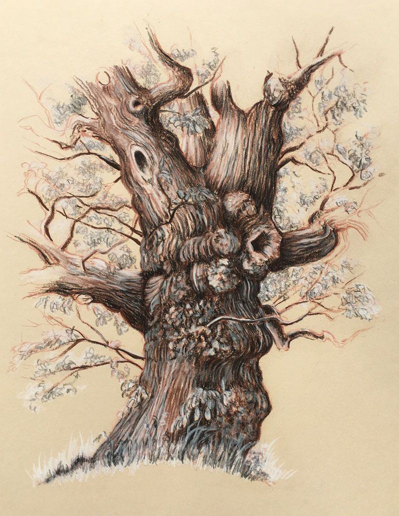 Drawing Of An Old Tree Tree Drawing Pencil Drawings Of Flowers