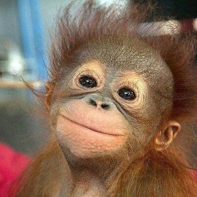 Pin Von Anja Klenke Auf Animals I Love Tiere Gluckliche Tiere Lachende Tiere