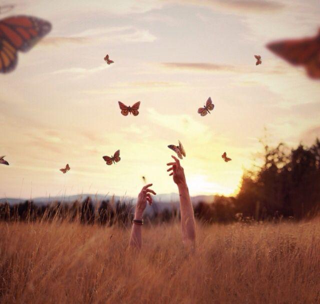 •wings•