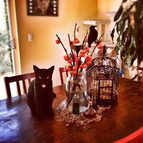 black cats opinion of your halloween decor lol Black Cats - halloween decorations com