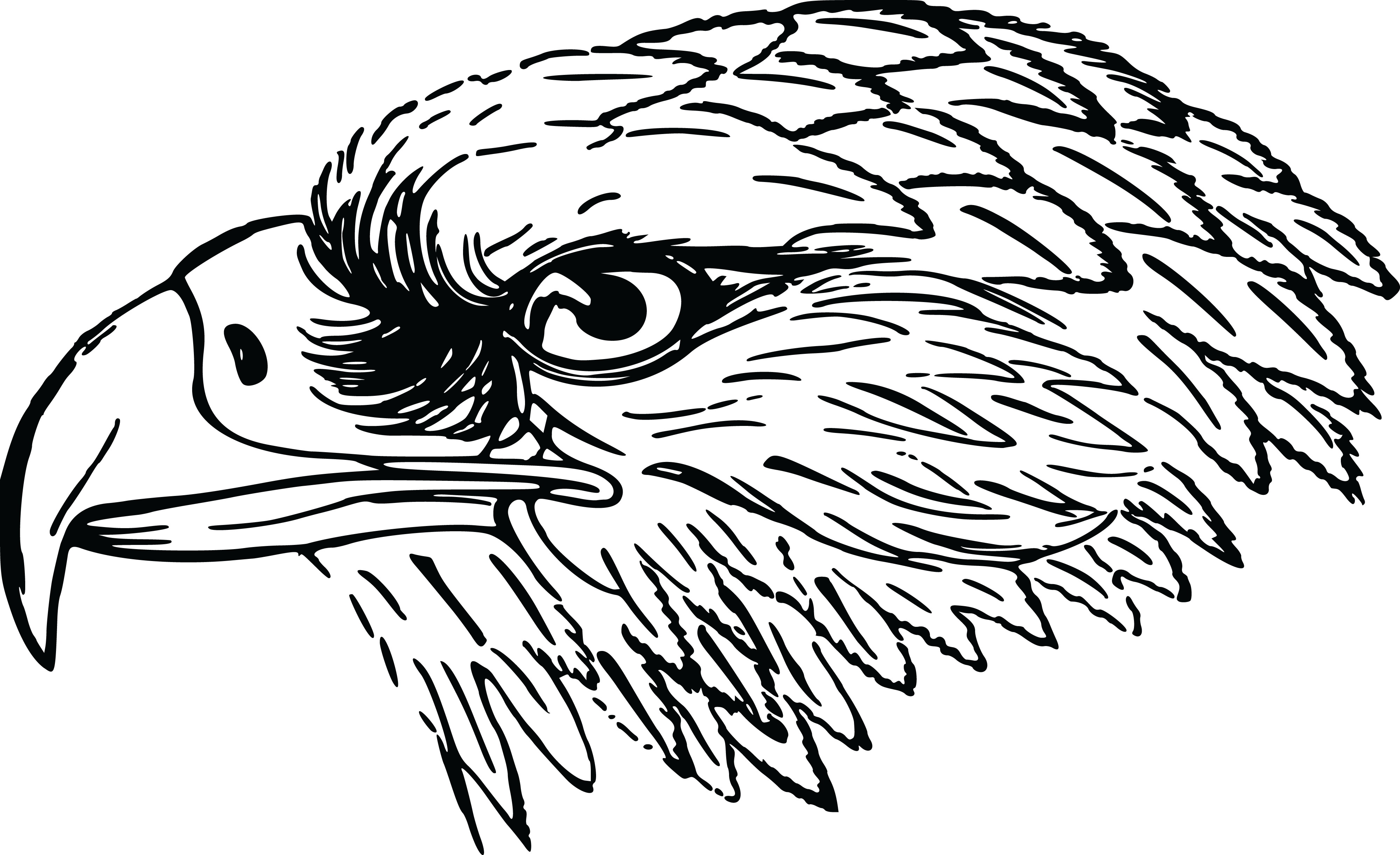 Eagle Clip Art Black And White Free Clipart Of A Black And White