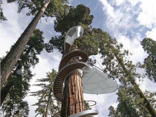casas en los árboles en Dstudio vivir en un árbol Pinterest El - casas en arboles