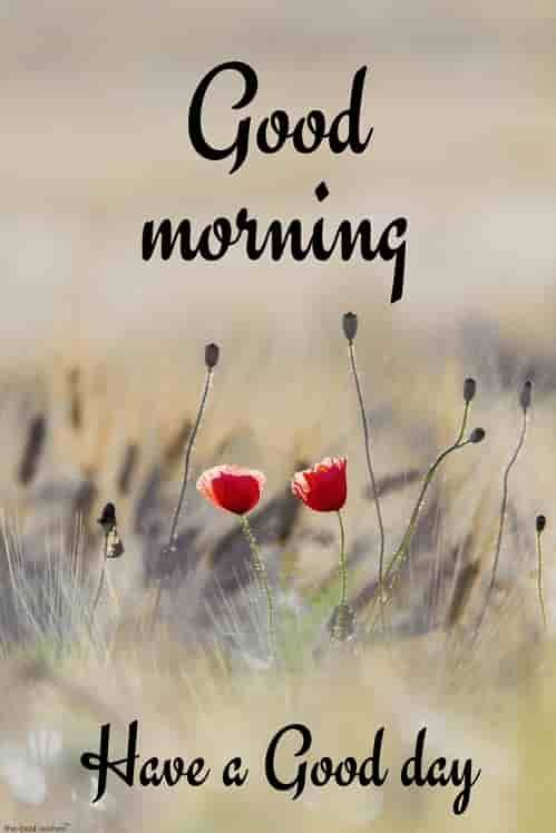 150+ Beautiful Good Morning Images [ Best Collection ...