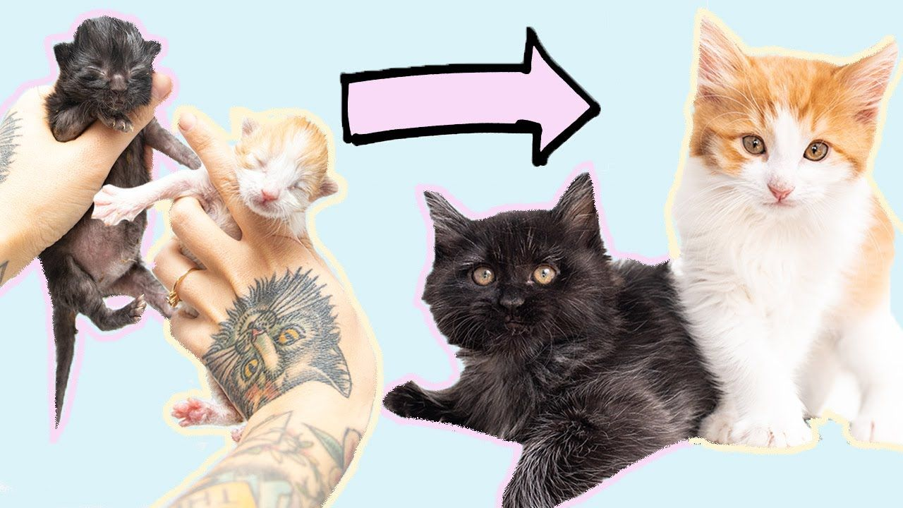 So Relaxing Watch Kittens Grow Up In 10 Minutes In 2020 Kittens Cats And Kittens Cute Kitten Gif