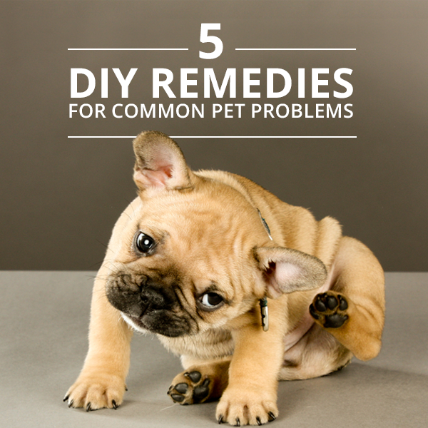 5 Natural Home Remedies For Common Pet Problems Bad Dog