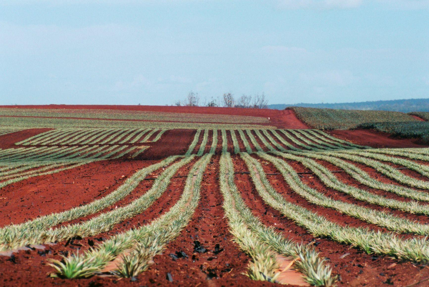 Secrets of Hawaii Central Oahu Pineapple Field Oahu