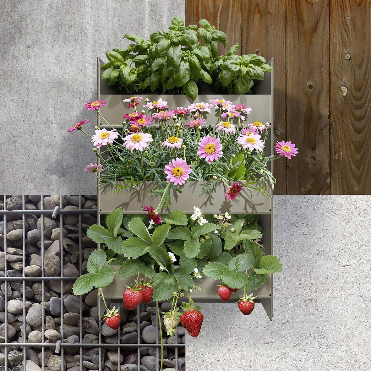 Stapelgarten® Das geniale Wandbegrünungssystem aus der