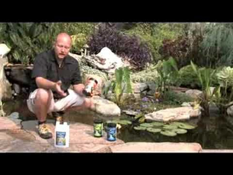 Water treatments are essential to a healthy pond fish for Koi pond maintenance service