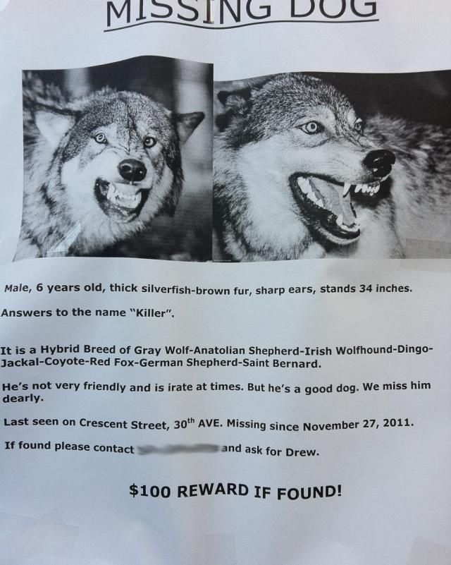 20 Funny Lost And Found Pet Posters Losing A Dog Losing A Pet