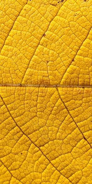 yellow - images for pinterest