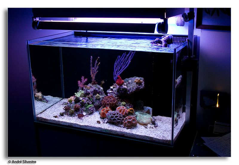 Small saltwater aquarium setup for Saltwater fish for small tank
