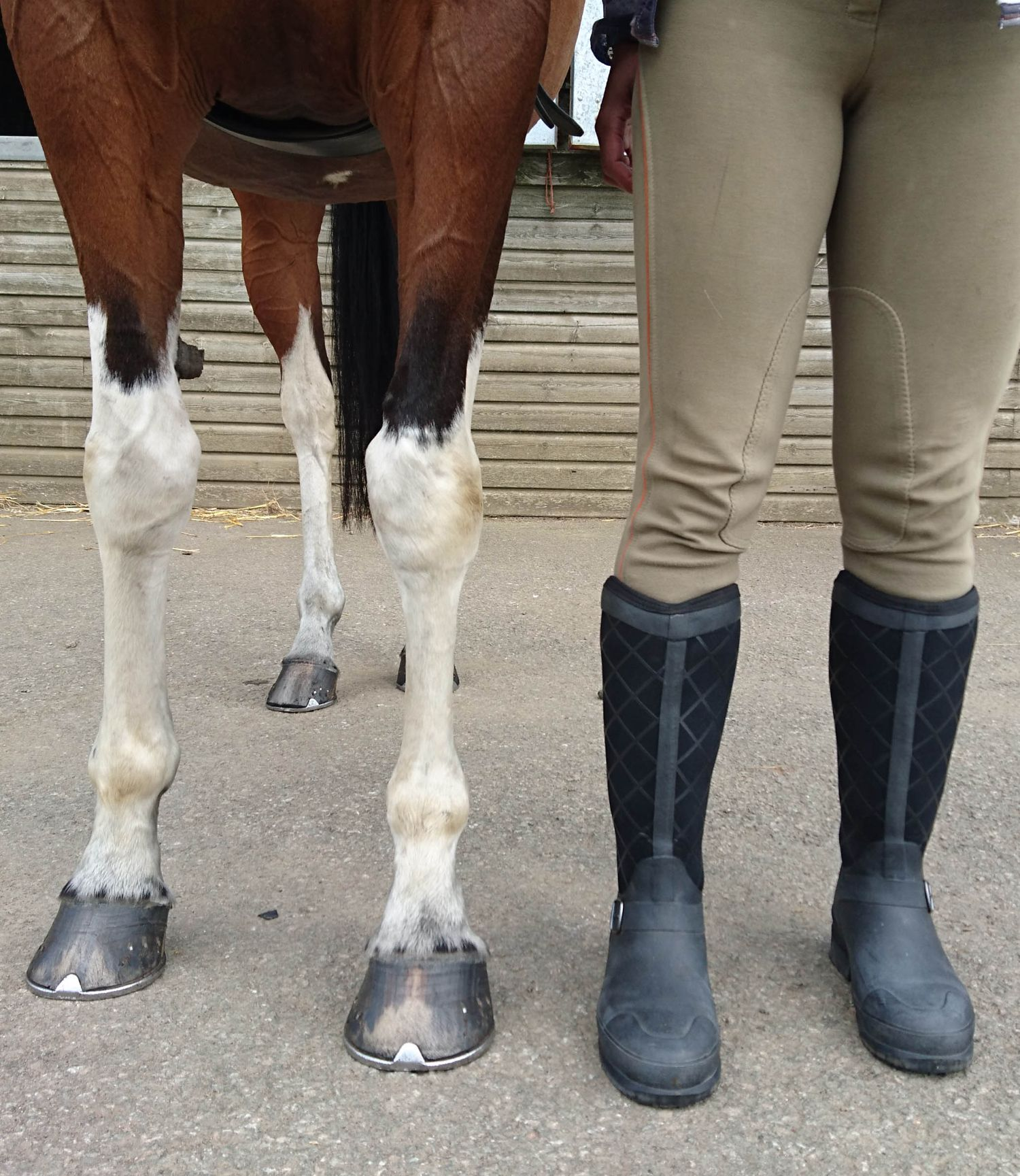 Pacy Muck Boots