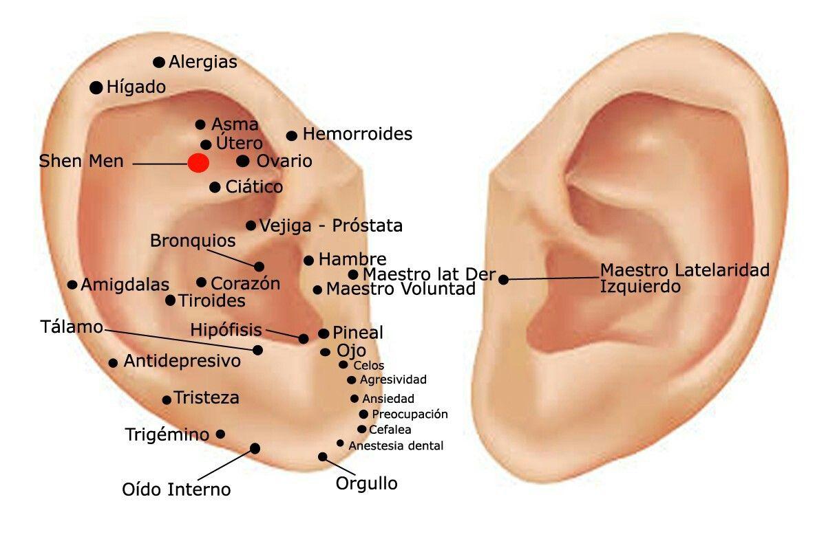 Terapia de imanes en la oreja para bajar de peso