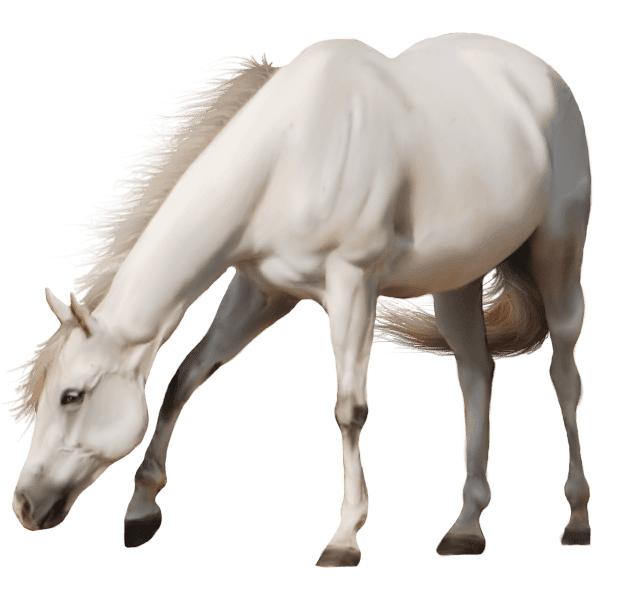 Beautiful Transparent White Horse Horse Png Horse Clipart Transparent Photoshopped Animals Horses White Horse