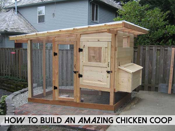 How To Build A Chicken Coop Shtfpreparedness Chickens Backyard