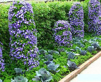Kitchen Garden Design edible landscaping vegetable garden design Beautiful Vegetable Garden Designs From Wwwlandscape Design Advisorcom