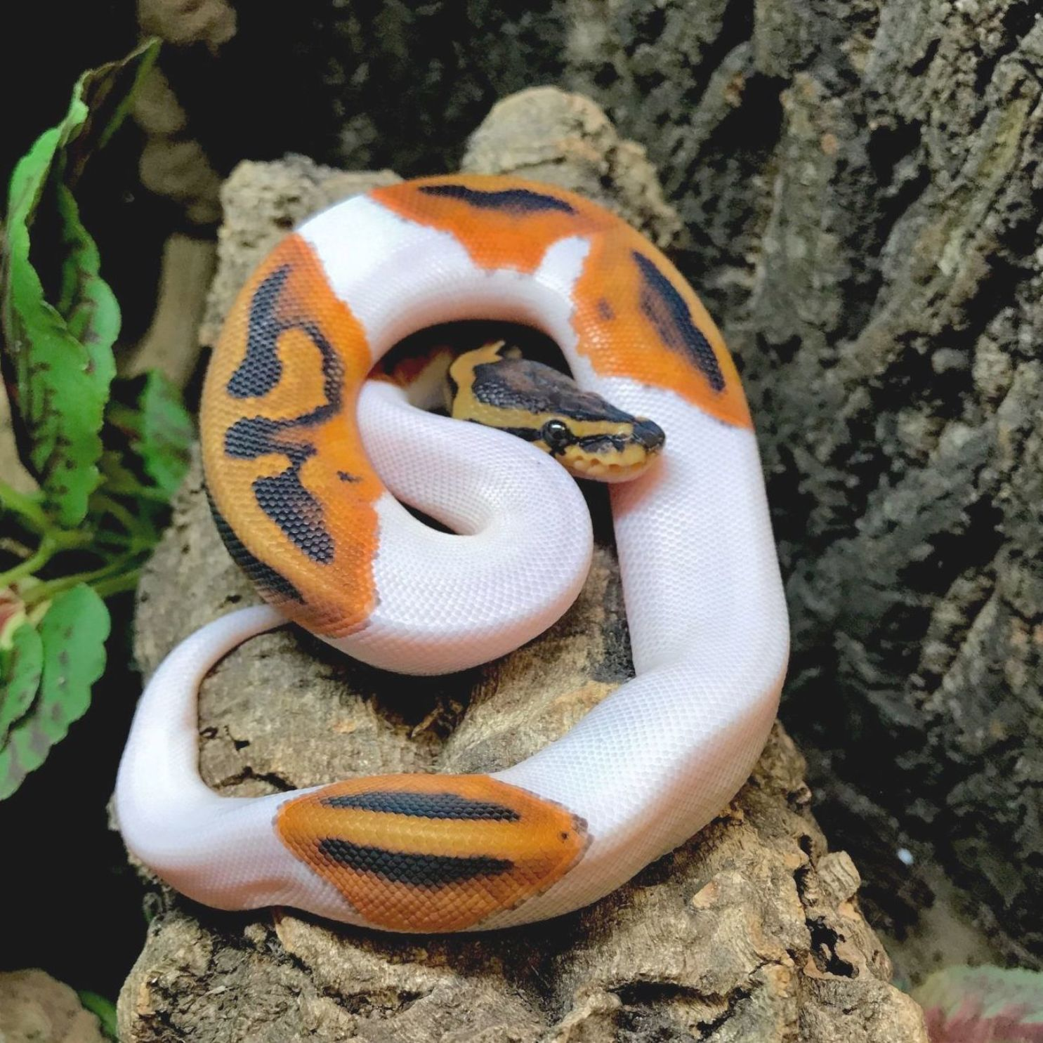 Pin On Snakes
