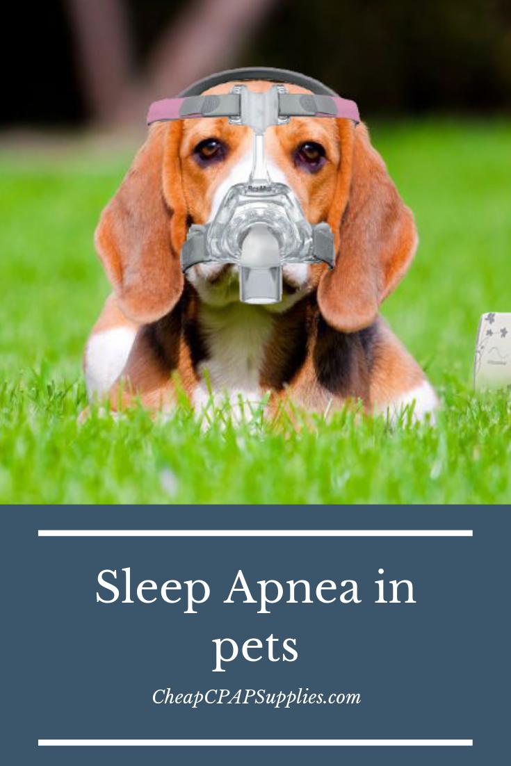 The Importance Of Detecting Sleep Apnea In Pets Sleep