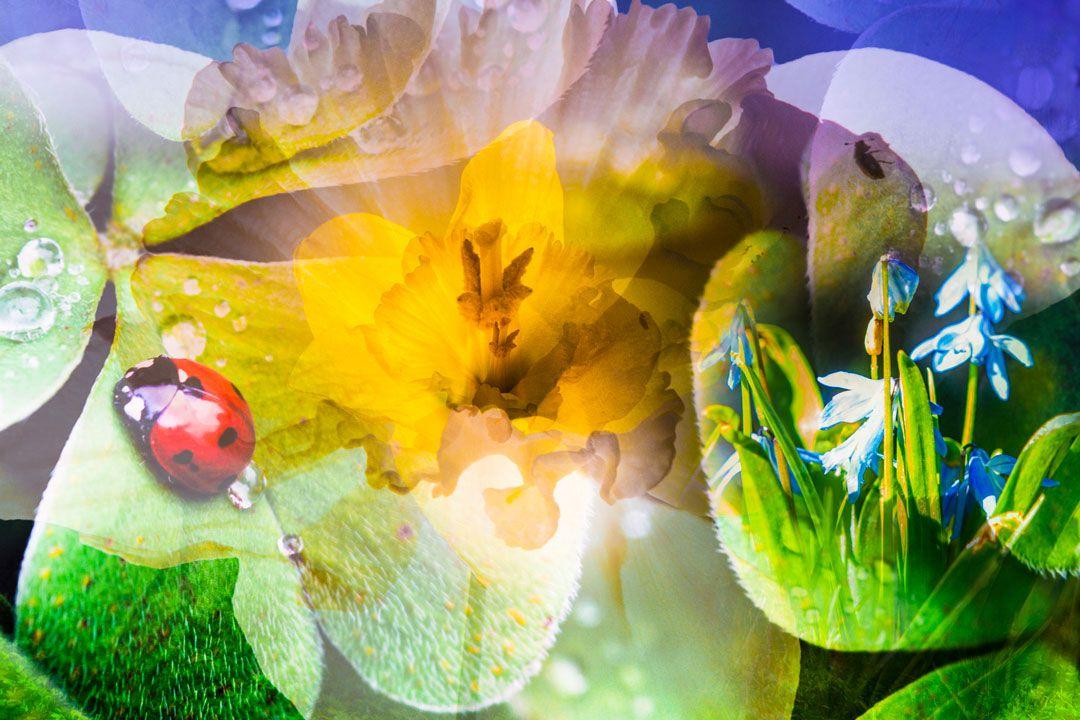 APRIL FLOWERING