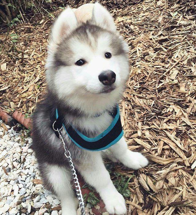 Pin Em Cute Puppies