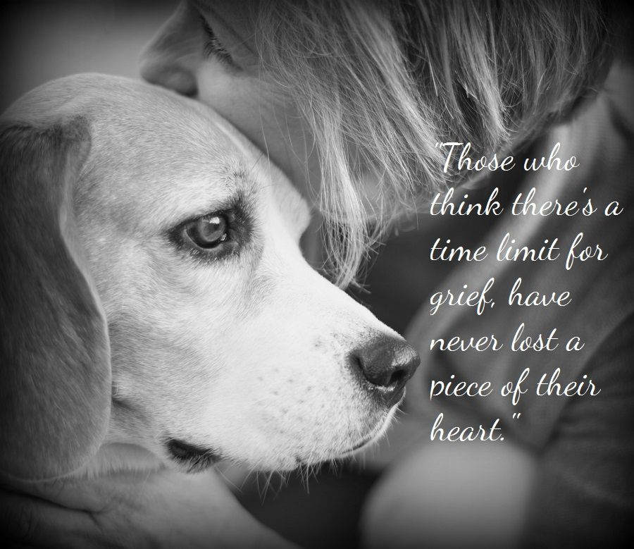 Dog Death Quotes: Pet Loss Quotes - Ever MemorialEver Memorial