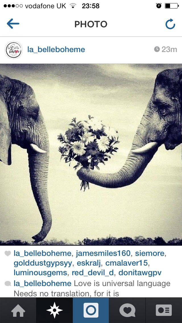 Romantic elephants.. Cute!