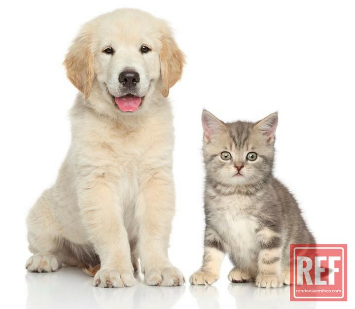 acessorios para pets