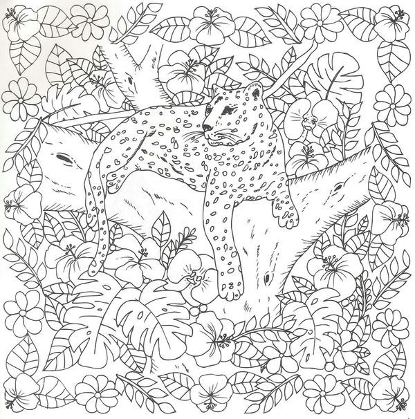 Cheetah colouring page coloring