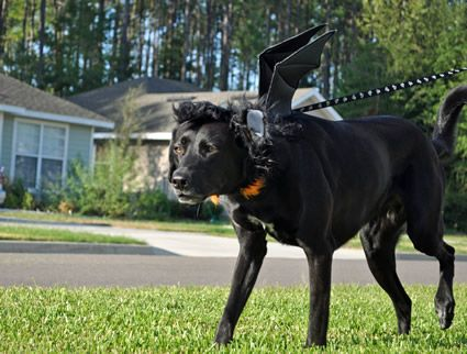 Halloween Costumes For Black Labs Google Search Pet Costumes