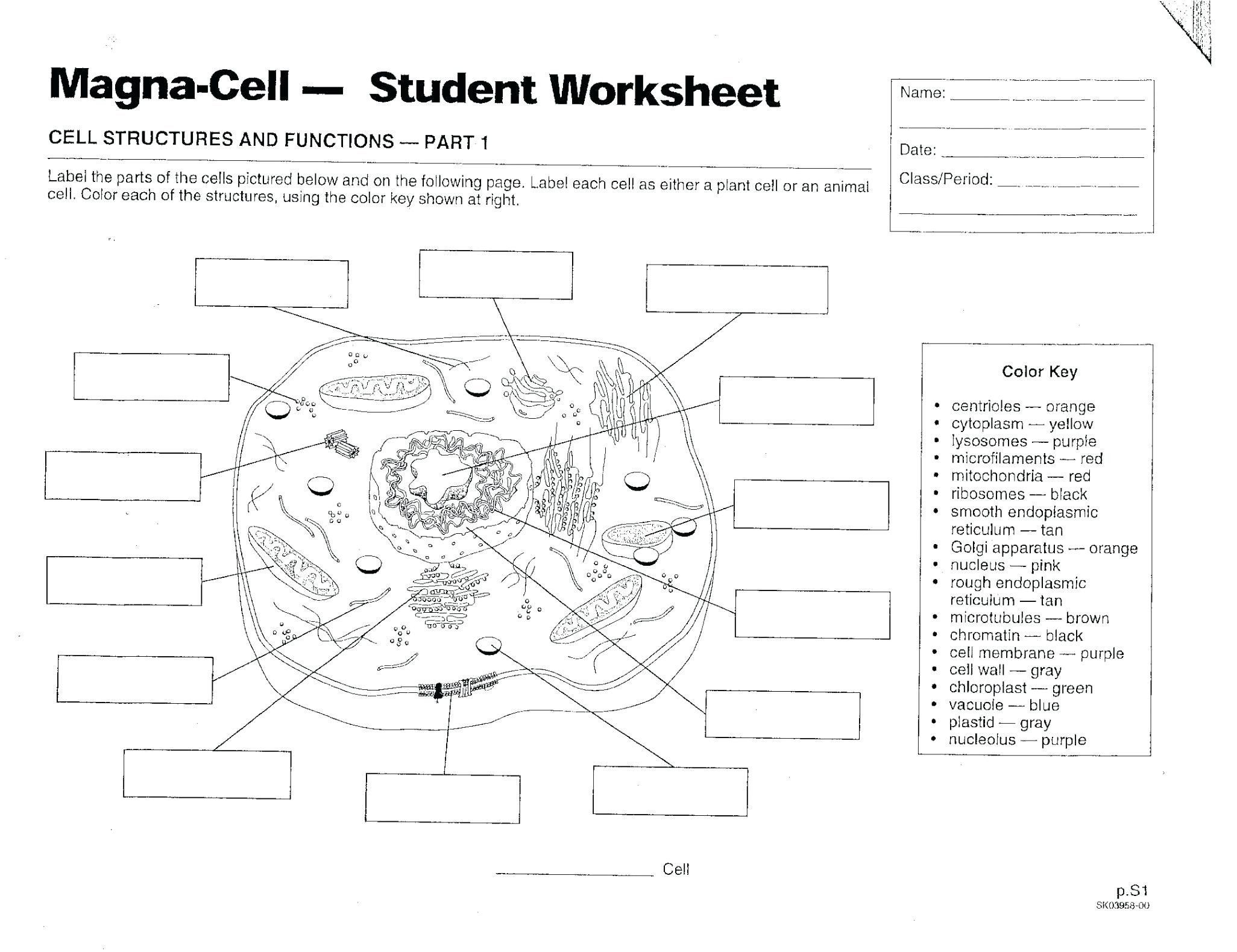 Plant Cell Coloring Key Awesome Biology Coloring Sheet Tulippaper Cells Worksheet Plant Cells Worksheet Cell Diagram