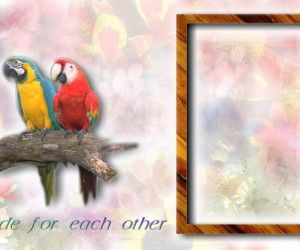 Cards Nice Pictures With Birds and Frame