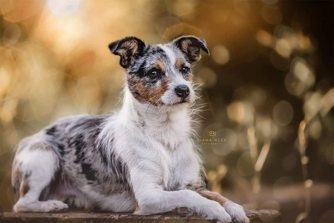 Ich Hoffe Ihr Hattet Alle Einen Schonen Nikolaus Tag Meine Gutschein Aktion Geht Noch 3 Tage Wenn Ihr Also Noch Schonen Nikolaus Hund Portraits Hunde Fotos