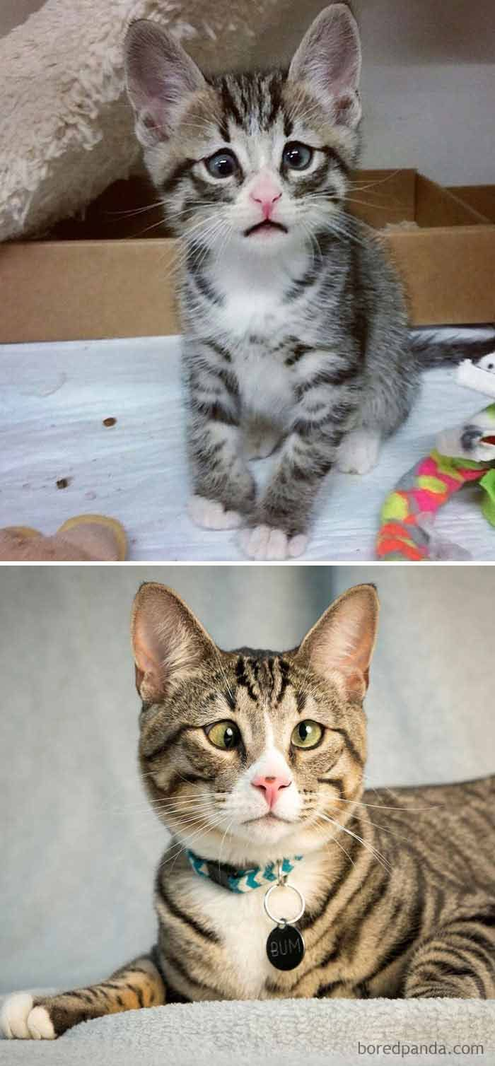 17 Before And After Photos Of Cats Growing Up We Love Cats And Kittens In 2020 Derpy Cats Cats Cute Cat Gif