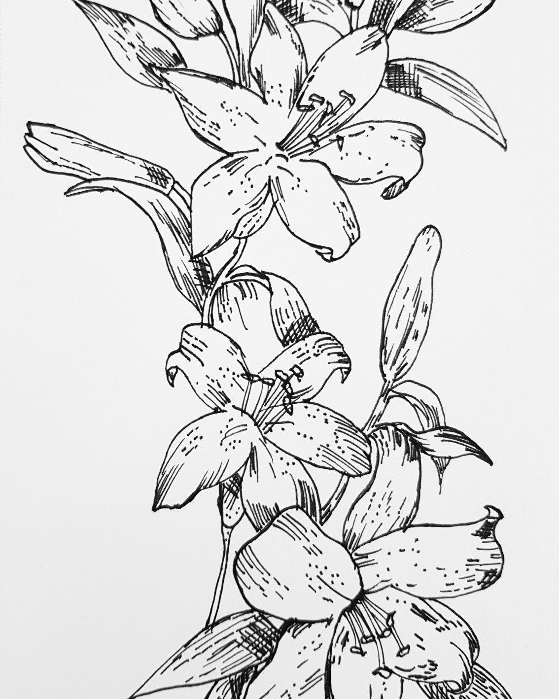 Orchid flowers beautiful art drawing pen fineliner flowers